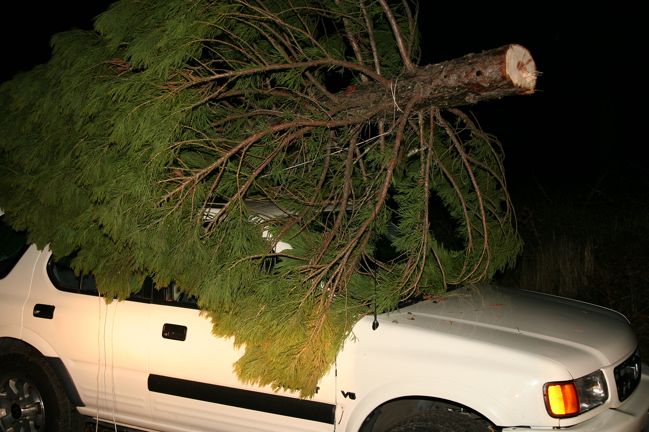 Yay! The tree is on the car!