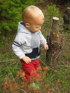 logan trekking around the forest