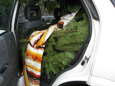 our little tree inside the car.