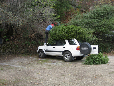 getting the trees (plural!!) tied to the top of the car