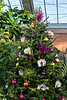 D328-2017<br /> Seasonal tree, Tropical House<br /> <br /> Christmas decorations in the Conservatory<br /> Matthaei Botanical Gardens, Ann Arbor<br /> Taken November 24, 2017