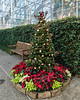 D328-2017<br /> Seasonal tree in the Temperate House.<br /> The theme of this tree is natural materials.  Dried, gilded hydrangea blooms and pomegranates feature prominently, rising out of a sea of poinsettias.<br /> <br /> Christmas decorations in the Conservatory<br /> Matthaei Botanical Gardens, Ann Arbor<br /> Taken November 24, 2017