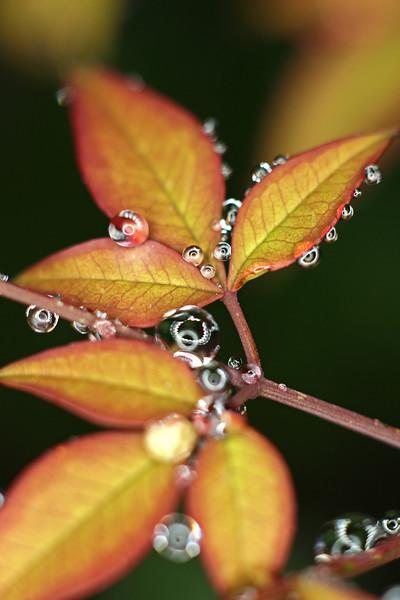 Natures ornaments