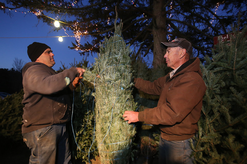 doug times and his father ken times both of tewksbury with christmas trees for - American Sales Christmas Trees