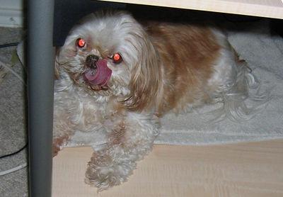 My sister's Dog Saphire.