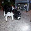 2008-12-30_200846_4084