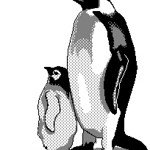 2013 04-06 Penguins