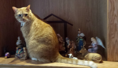 Our cat recreates the nativity scene inserting the much overlooked barn cat role into the scene