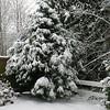 1st snow of 2008-2009..December 17th 2008...My backyard