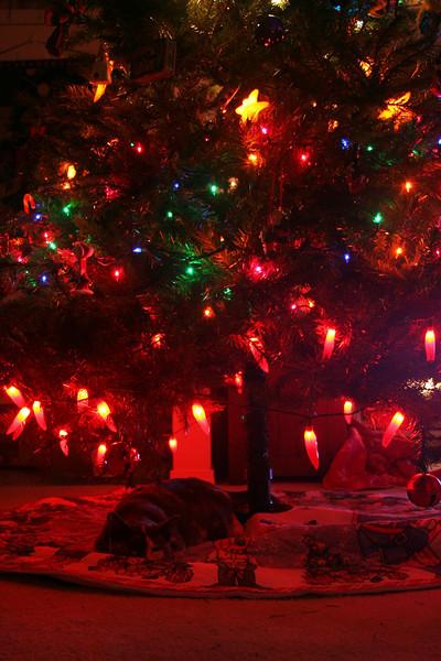 Kitty under tree....