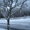 1st snow of 2008-2009..December 17th 2008...Trees lining entrance