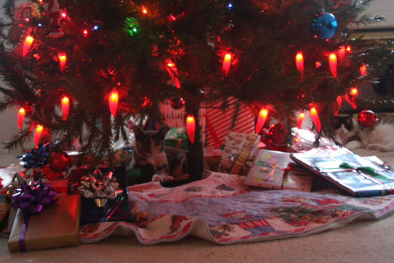 I like it under the tree with all my gifts says Zoot