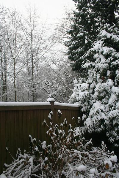 1st snow of 2008-2009..December 17th 2008...