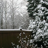 1st snow of 2008-2009..December 17th 2008...