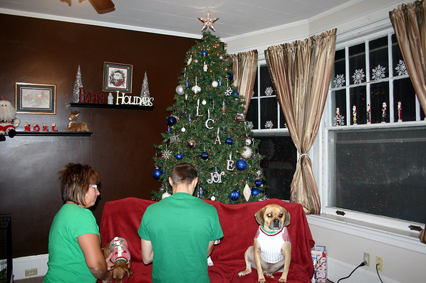 Louie just wishes those other dogs would get ready for the picture ( 2010 )