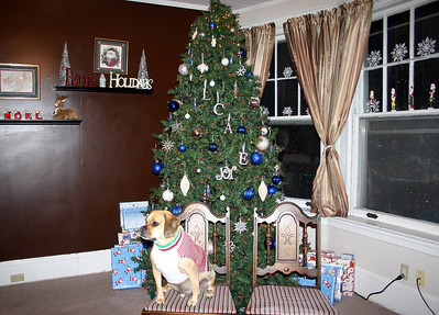 Louie's ready for his Christmas picture ( 2010 )