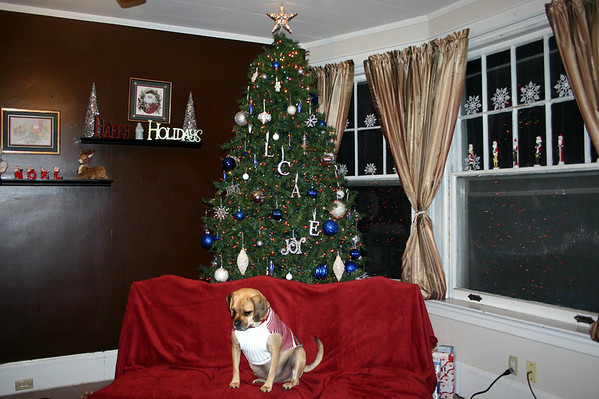 Merry Christmas from Louie the Puggle ( 2010 )