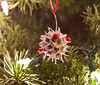 Sweet Gum Ball Ornaments 4