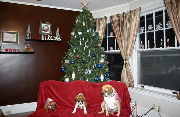 Merry Christmas from Charlie, Boone and Louie ( 2010 )