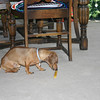 Charlie enjoys a bone on Christmas Eve ( 2011 )