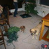 The dogs are ready for the Holidays ( 2012 )