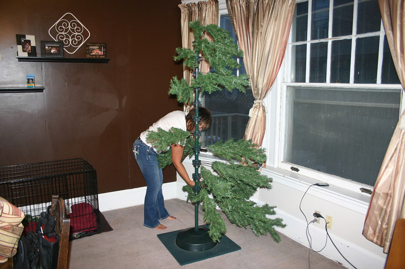 Lori puts up the Christmas tree ( 2012 )