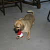 Louie and his new Christmas toy.