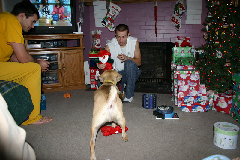 Cory and Alex playing with Louie and his new Christmas toy.