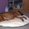 Justice resting on his bed