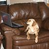 Meg works on the laptop over Christmas ( 2010 )