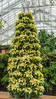 2016 version of the traditional poinsettia tree