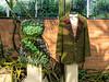 Succulent dress and Moss jacket by Avant Garden