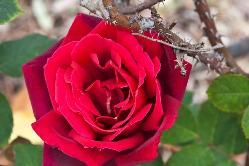 Winter Bloom 4