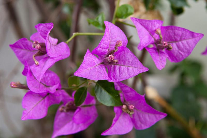 Winter Bloom 8