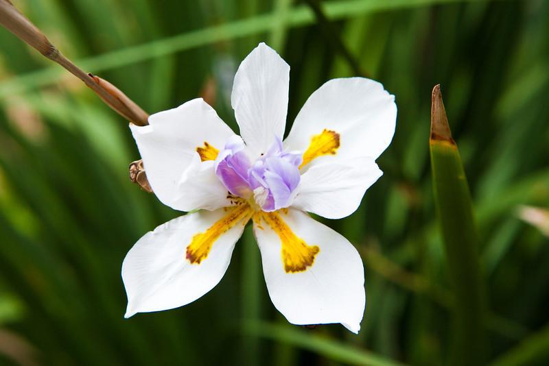 Winter Bloom 7