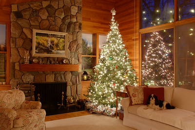 Stuart with Christmas Tree