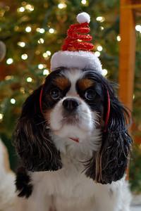 Stuart Dressed for Christmas (1)