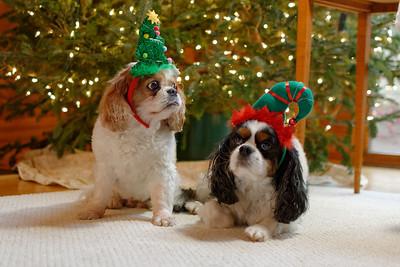 Pepper & Stuart Dressed for Christmas (3)