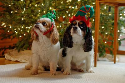 Pepper & Stuart Dressed for Christmas (2)