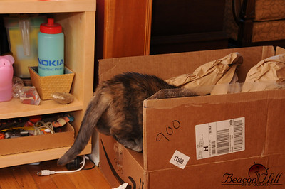 Rocket explores the opened and now discarded boxes.
