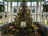 D341-2013  Poinsettia tree<br /> <br /> Matthaei Botanical Gardens Conservatory<br /> December 7, 2013