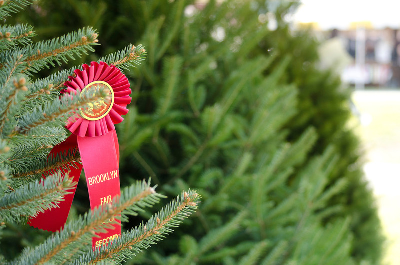 Prize-winning Christmas tree
