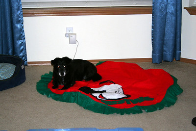 We put up our Christmas decorations on Thanksgiving evening after everyone leaves. I got out the tree skirt. Mitch thought I got a blanket out for him to take a nap on.  Nov 2010