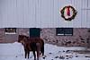 Christmas on the Farm, Dane County, Wisconsin