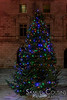 The Christmas Tree in front of City Hall.