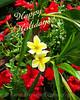 Plumeria from Hawaii