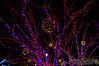 Close up of a tree decorated with lights in Longfellow Square.