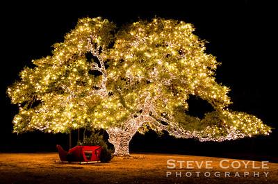 Christmas Tree - Texas Style