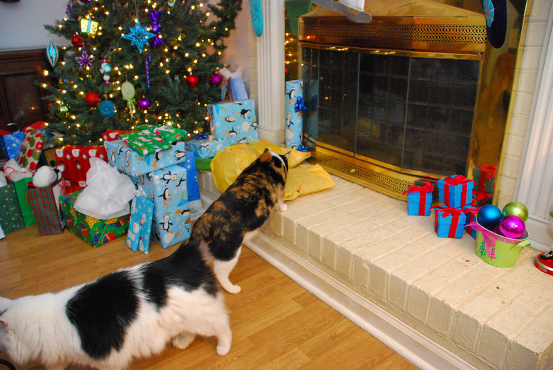 The cats were the first moving beings to hit the presents today.