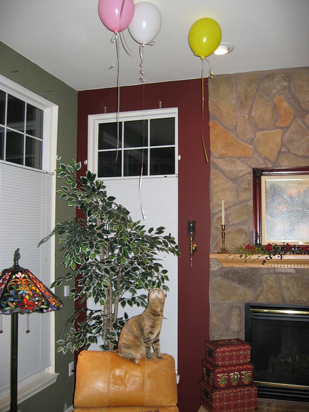 Cleo Helps Decorate, December 3, 2003